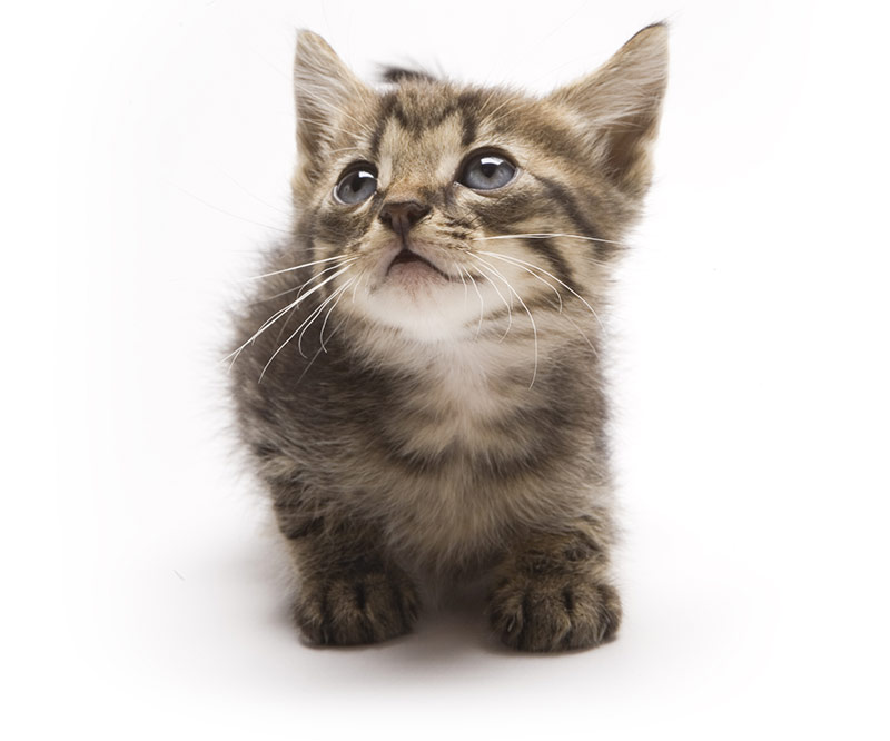 Fig. 2: At this point, both I and you probably need a break. Enjoy a picture of a ridiculously cute kitty.